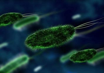 細菌とウイルスの画像2