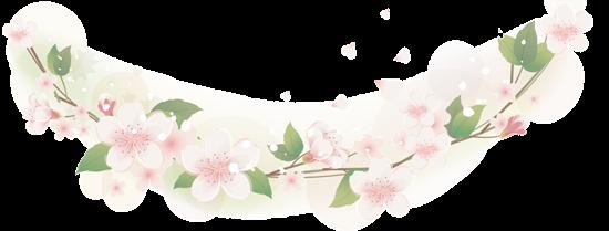 桜の花の枠B