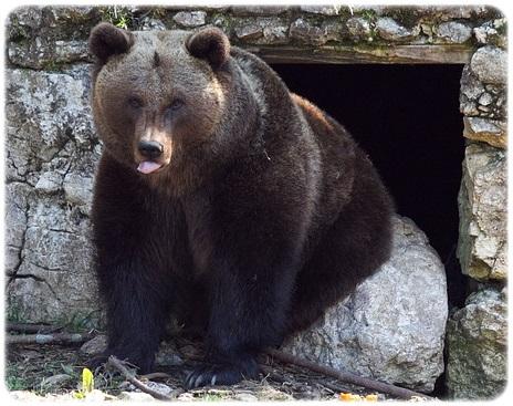 熊は冬眠をどこでするF