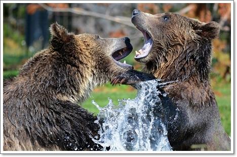 熊は冬眠をどこでするB