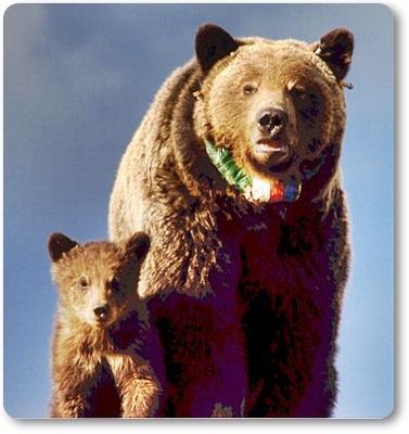 熊は冬眠をどこでするE