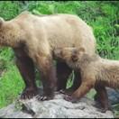 熊は冬眠どこでするアイキャッチ画像