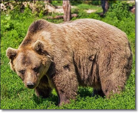 熊は冬眠をどこでするA