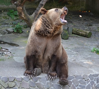 熊の雄叫び