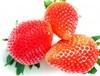 老化防止する食べ物いちごのイラスト