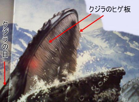 イルカとクジラの違いヒゲ板の写真