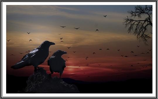 夜カラスが鳴く理由夜のカラスが鳴いてる写真