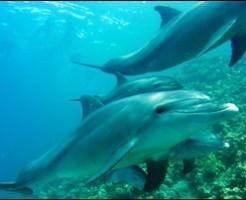 イルカとクジラの違いシャチは仲間