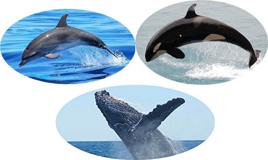 イルカとクジラとシャチの画像
