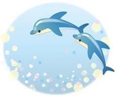 イルカとクジラの違いイルカイラストA