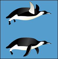 ペンギンの白黒はなぜ