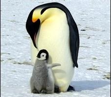 ペンギンは鳥?のアイキャッチ画像A