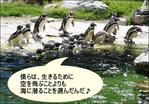 ペンギンが海に入る写真