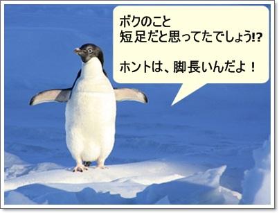 ペンギンの写真A
