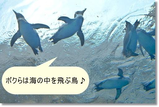 ボクらは海の中を飛ぶ鳥