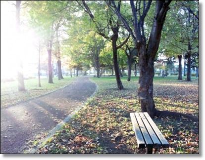 朝日の公園の写真
