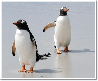 ペンギン2羽の写真B