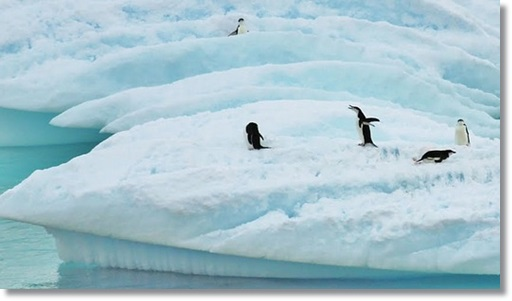 南極大陸とペンギンの写真
