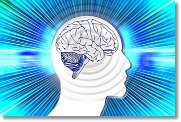 脳のイラスト