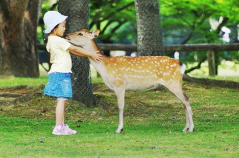 鹿と子供のふれ合い