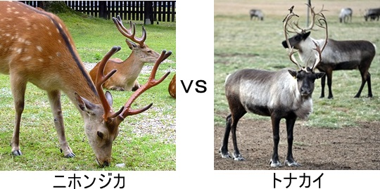 鹿VSトナカイ