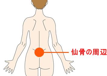 仙骨の部位の図