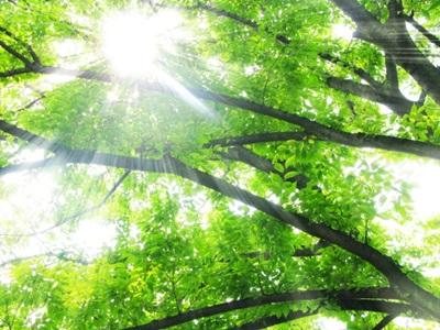 木漏れ日の画像