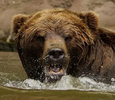 熊の顔のアップ画像