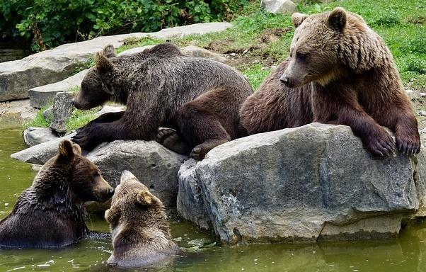 複数の熊の画像