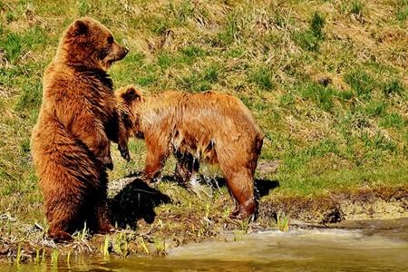 熊が立ち上がった画像
