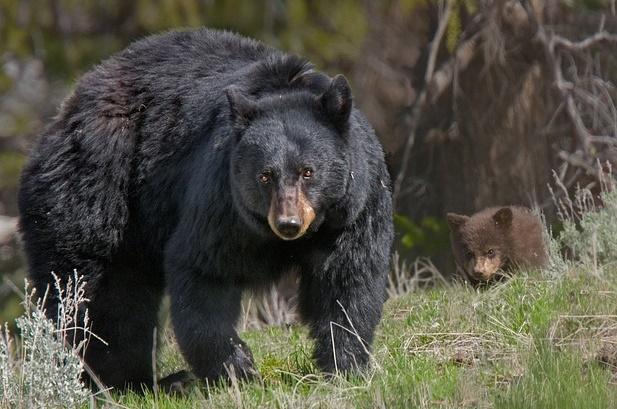 熊の親子の画像