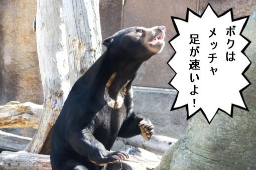 熊画像 熊は足が速い
