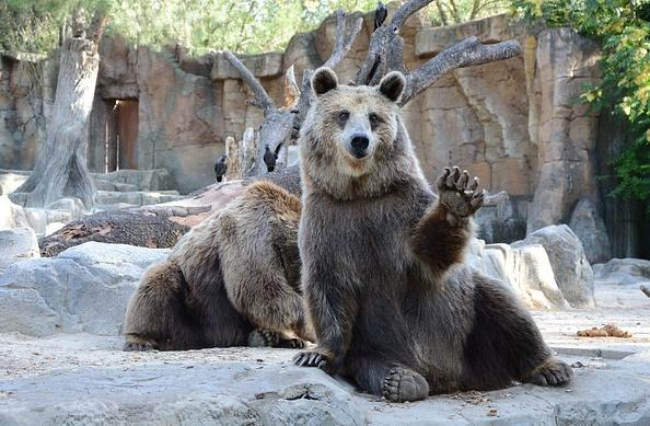 動物園の熊の画像