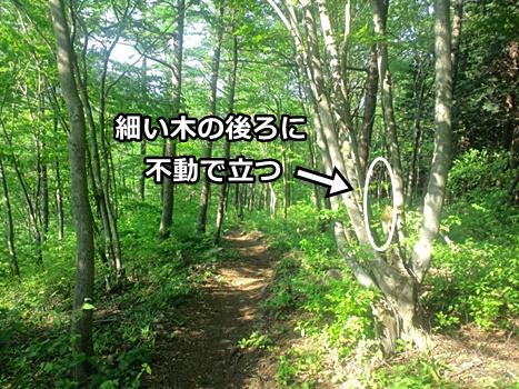熊対策の木化けの説明画像