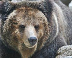 熊対策!熊に襲われないための対処法のアイキャッチ画像