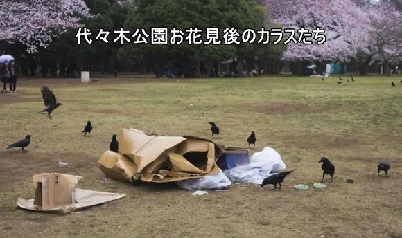 ゴミから食べ物を探すカラスたちの画像