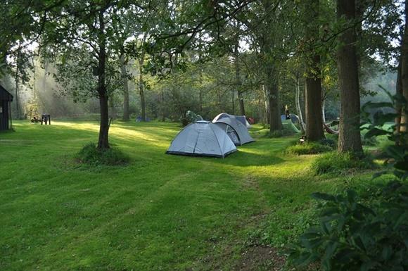 キャンプ場に並ぶテントの画像