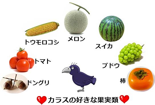 カラスの好きな果実類の画像