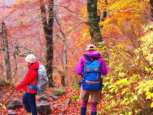 紅葉した山の中を登山する人たちの画像