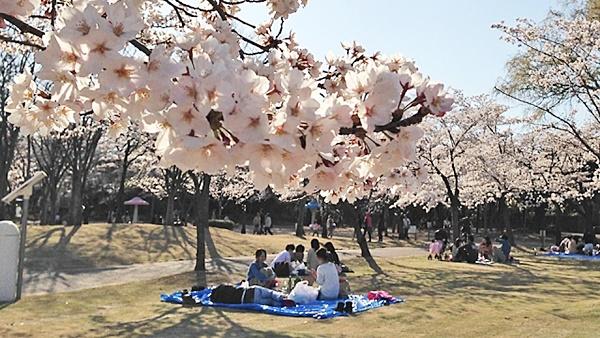 桜の木の下でお花見を楽しむ家族の画像