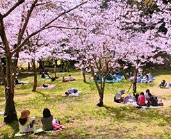 お花見の起源・由来・歴史を分かりやすく説明のアイキャッチ画像