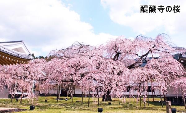 醍醐寺の桜の画像